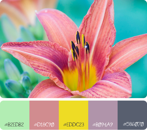 flower with colour palette