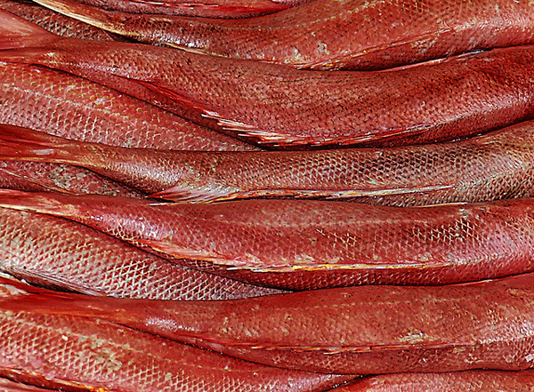 A stack of red fish