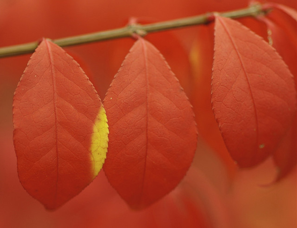 Close up of orange autumn leaves