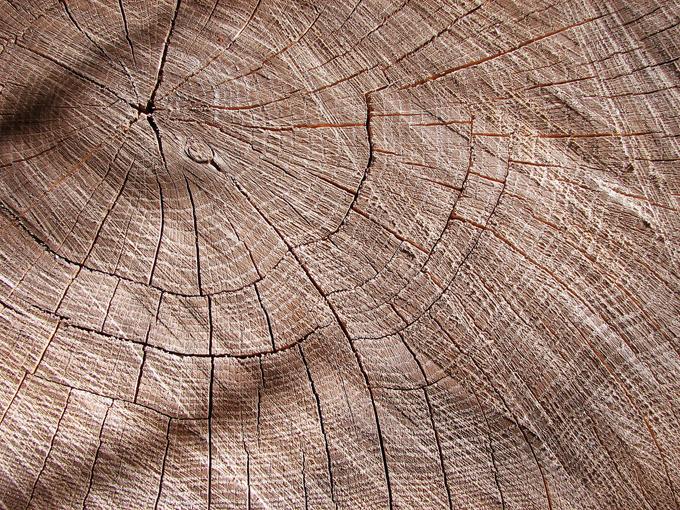 tree trunk rings