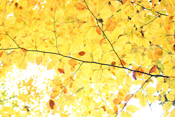 View of autumn leave on a tree