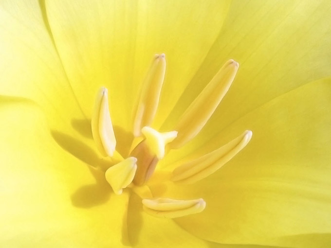 Close up of a yellow flower