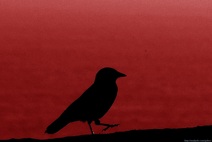 Silhouette of a bird against a red background