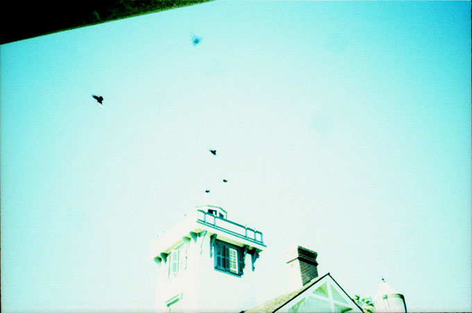 crows over a lighthouse