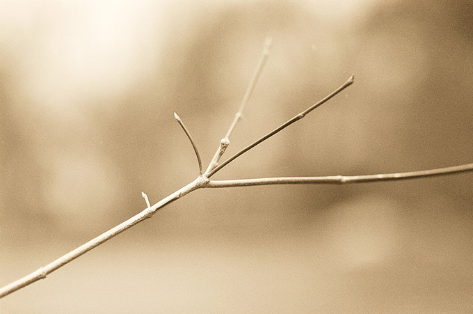 Close up of a winter twig